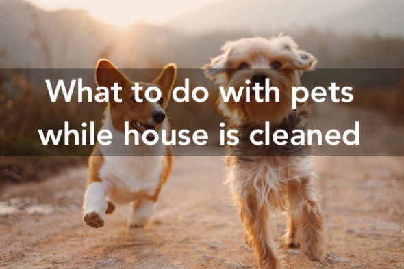 What To Do With Pets While House Is Being Cleaned